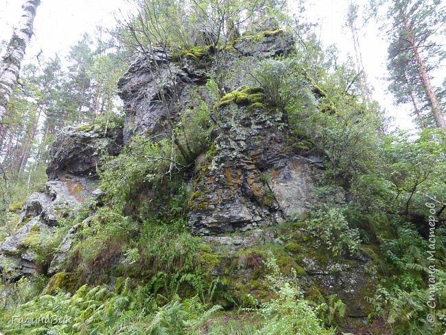 Вторым местом нашего временного жительства был Горно-Алтайский ботанический сад, расположенный по Чуйскому тракту в окрестности села Камлак и созданный в 1994 году. В него мы прибыли 26 июля. фото 80