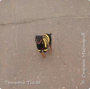 https://stranamasterov.ru/node/1041678?c=new_675 Знакомьтесь это Семён или Сёма ему 11 августа исполнилось полгодика, на этом фото ему 1 месяц ♡♡♡)) фото 7