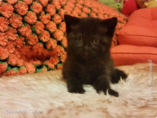http://stranamasterov.ru/node/1041678?c=new_675 Знакомьтесь это Семён или Сёма ему 11 августа исполнилось полгодика, на этом фото ему 1 месяц ♡♡♡)) фото 1