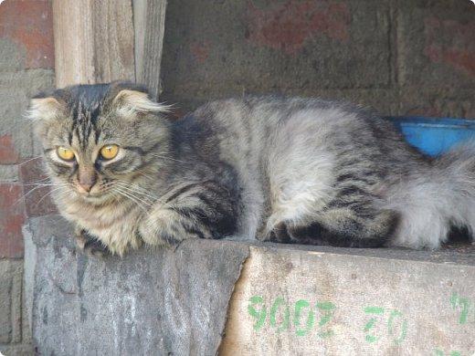 """Здравствуй, СМ! Сегодня я сдаю работу на конкурс """"домашние любимцы"""" ссылка - http://stranamasterov.ru/node/1041678?c=new_675. У меня есть 2 кота и 1 кошка. Она беременная. Скоро  должна окатиться. Коты в общем, уличные, но иногда сидят дома. И так, на первом фото кот Кузя. Кузя у нас чуть меньше пол года. Когда его принесли домой, решили, что он будет домашним и не пускали на улицу. Он был после этого какой-то печальный и постоянно засиживался у окна и мечтал пойти туда, """"в не ведомый край"""". Потом мы решили все-таки выпустить его. Потом он прижился на улице. фото 2"""