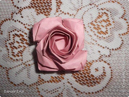 Розы кавасаки фото 4