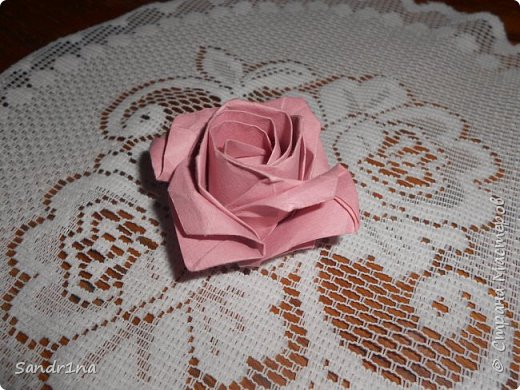 Розы кавасаки фото 5