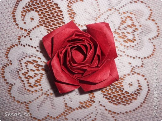 Розы кавасаки фото 6