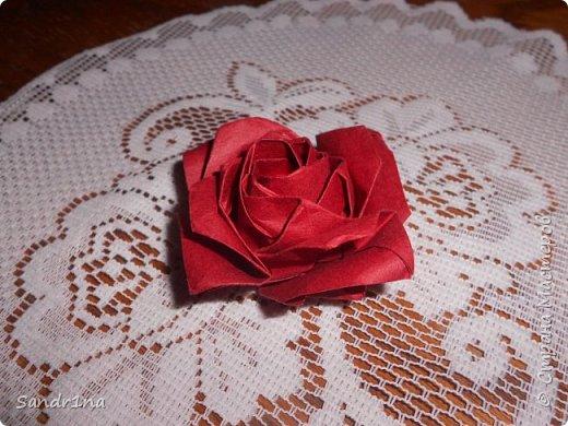 Розы кавасаки фото 7