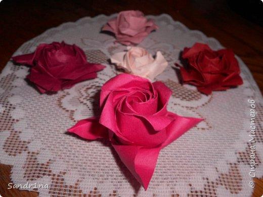 Розы кавасаки фото 12
