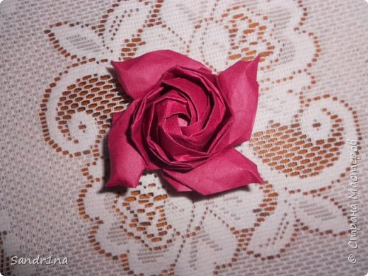 Розы кавасаки фото 9