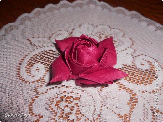 Розы кавасаки фото 10