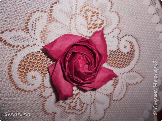 Розы кавасаки фото 8
