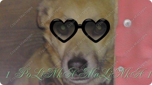 Привет Страна сегодня я вам покажу мои питомцев. Итак начнём: Это моя собака его зовут Вальтер. Ему уже 2 года. фото 3
