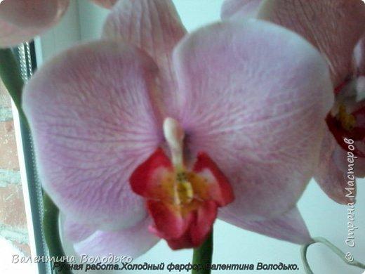 Здравствуйте жители Страны Мастеров!!У меня новая орхидея.Просили слепить желтую,а у меня получилась фиолетовая.Бывает иногда желание сделать по своему. фото 3
