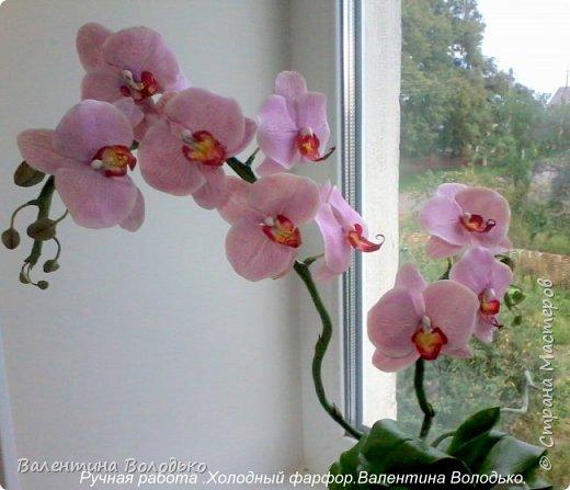 Здравствуйте жители Страны Мастеров!!У меня новая орхидея.Просили слепить желтую,а у меня получилась фиолетовая.Бывает иногда желание сделать по своему. фото 1