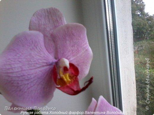 Здравствуйте жители Страны Мастеров!!У меня новая орхидея.Просили слепить желтую,а у меня получилась фиолетовая.Бывает иногда желание сделать по своему. фото 7