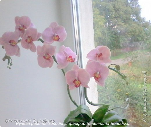 Здравствуйте жители Страны Мастеров!!У меня новая орхидея.Просили слепить желтую,а у меня получилась фиолетовая.Бывает иногда желание сделать по своему. фото 6