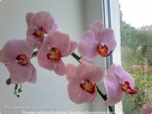Здравствуйте жители Страны Мастеров!!У меня новая орхидея.Просили слепить желтую,а у меня получилась фиолетовая.Бывает иногда желание сделать по своему. фото 2