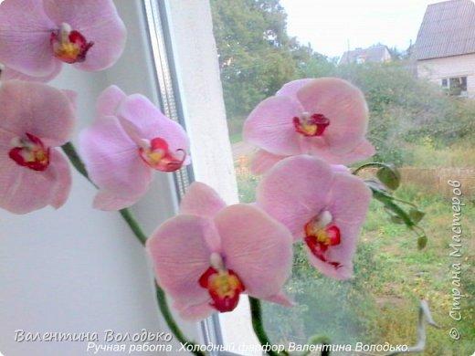Здравствуйте жители Страны Мастеров!!У меня новая орхидея.Просили слепить желтую,а у меня получилась фиолетовая.Бывает иногда желание сделать по своему. фото 8
