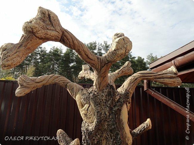 Здравствуй страна !!!!!! Вот наконец то  я заглянула в гости  Задумала грандиозный проект , вот начало положено. Теперь у меня есть вековое дерево.А сколько ещё всего будет.... фото 2