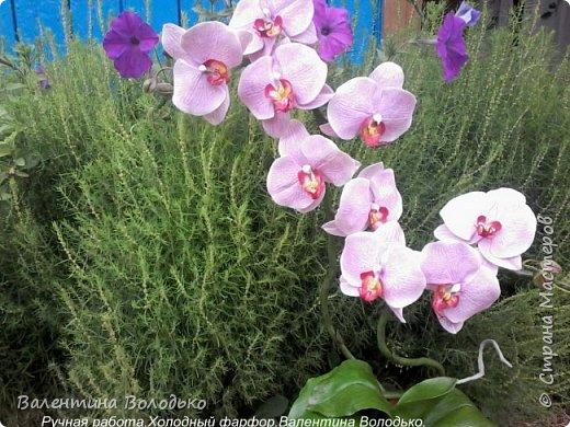 Здравствуйте жители Страны Мастеров!!У меня новая орхидея.Просили слепить желтую,а у меня получилась фиолетовая.Бывает иногда желание сделать по своему. фото 10