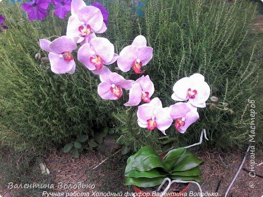 Здравствуйте жители Страны Мастеров!!У меня новая орхидея.Просили слепить желтую,а у меня получилась фиолетовая.Бывает иногда желание сделать по своему. фото 9