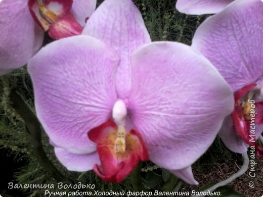 Здравствуйте жители Страны Мастеров!!У меня новая орхидея.Просили слепить желтую,а у меня получилась фиолетовая.Бывает иногда желание сделать по своему. фото 12
