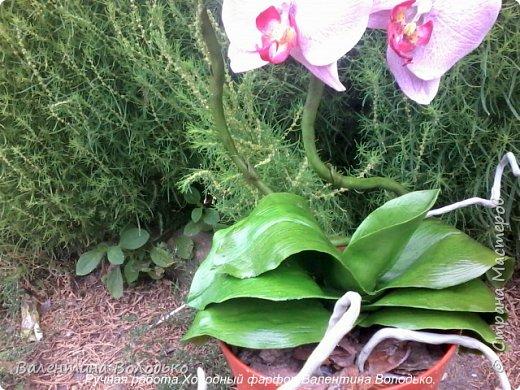 Здравствуйте жители Страны Мастеров!!У меня новая орхидея.Просили слепить желтую,а у меня получилась фиолетовая.Бывает иногда желание сделать по своему. фото 11
