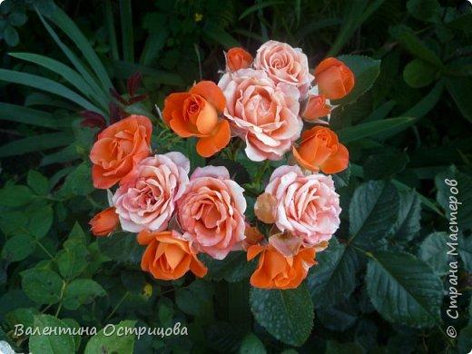 Приветствую  Вас , дорогие  гости  моей  странички,  дорогие  мои  подружки !   Что  дало  нам  это  лето ?  Конечно  же  ароматы  летних  цветов  и  любование  ими !    Я  с  удовольствием  делюсь  с  Вами  ! фото 30