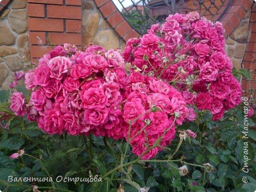 Приветствую  Вас , дорогие  гости  моей  странички,  дорогие  мои  подружки !   Что  дало  нам  это  лето ?  Конечно  же  ароматы  летних  цветов  и  любование  ими !    Я  с  удовольствием  делюсь  с  Вами  ! фото 42