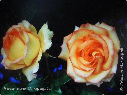 Приветствую  Вас , дорогие  гости  моей  странички,  дорогие  мои  подружки !   Что  дало  нам  это  лето ?  Конечно  же  ароматы  летних  цветов  и  любование  ими !    Я  с  удовольствием  делюсь  с  Вами  ! фото 35