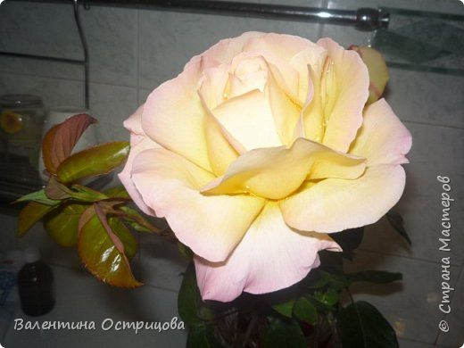 Приветствую  Вас , дорогие  гости  моей  странички,  дорогие  мои  подружки !   Что  дало  нам  это  лето ?  Конечно  же  ароматы  летних  цветов  и  любование  ими !    Я  с  удовольствием  делюсь  с  Вами  ! фото 23
