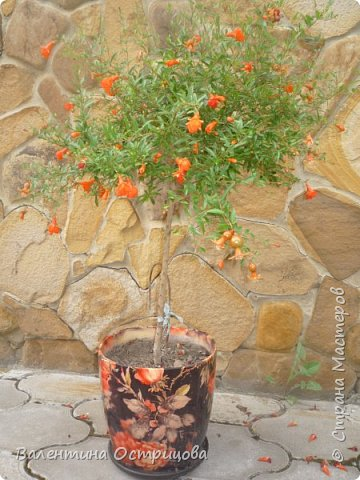 Приветствую  Вас , дорогие  гости  моей  странички,  дорогие  мои  подружки !   Что  дало  нам  это  лето ?  Конечно  же  ароматы  летних  цветов  и  любование  ими !    Я  с  удовольствием  делюсь  с  Вами  ! фото 6