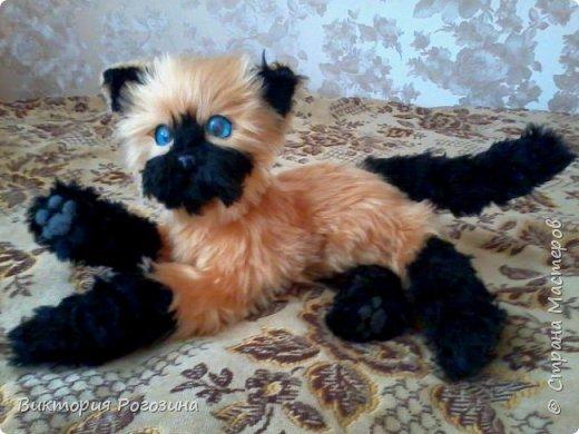 Котенок Татошка фото 3