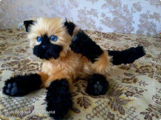 Котенок Татошка фото 4
