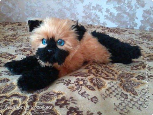 Котенок Татошка фото 5