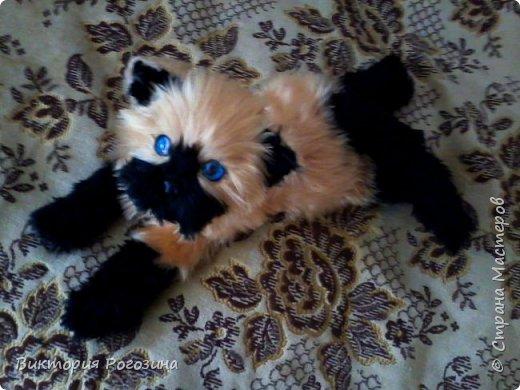 Котенок Татошка фото 7