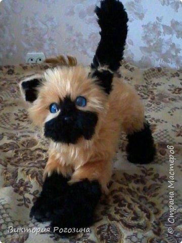 Котенок Татошка фото 8