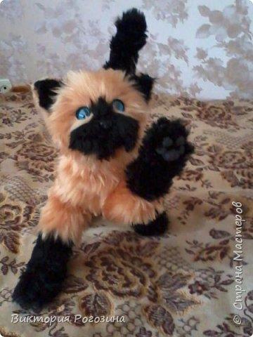 Котенок Татошка фото 9