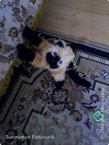 Котенок Татошка фото 11