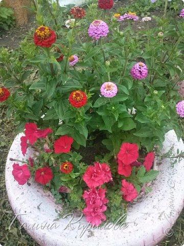 Добрый день ! Писать много не буду , просто загружу фото своих цветов . Петунья махровая. фото 5