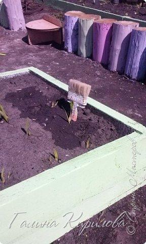 Добрый день ! Вот решила выложить свои весенние труды . Это мой двор в процессе работы . Это грядки под клубнику . фото 13