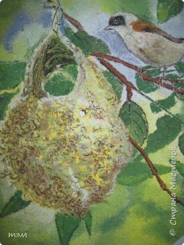 Ремез у гнезда фото 1