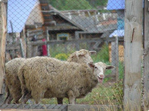 Тоненькие ножки, маленькие рожки. Кто это ребята? Это же козлята! Мама их ведет гулять, порезвиться, поиграть. свежей травки пощипать, с веток листья пожевать. Козочка рогатая - молочком богатая. Хоть коза невелика - даст отпор наверняка. Есть копыта и рога - Не боимся мы врага!  (Горенбургова Р.) фото 17