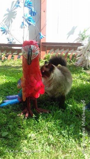 К нам прилетел попугай Ара фото 5
