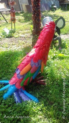 К нам прилетел попугай Ара фото 2