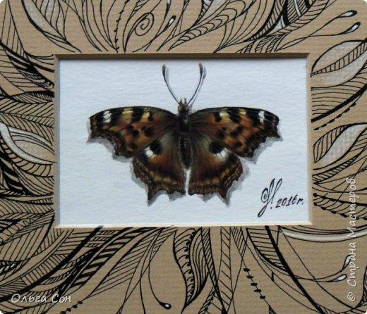 Приветствую заглянувших в гости))) Эта работа идёт в продолжение давней серии  копий бабочек, только на этот раз паспорту оформлено в зентангле. Размер 30х30, бабочка акварель, паспорту чёрная гелевая ручка, белый карандаш. фото 4