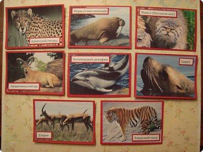 Это я к вам со своими АТСками!!! Выбирают только участники совместника http://stranamasterov.ru/node/1040245 Я посвятила свои карточки животным, занесенными в Красную книгу.... Итак, вот что у меня получилось....  Все вместе!!  Вся информация взята с просторов интернета.... фото 1