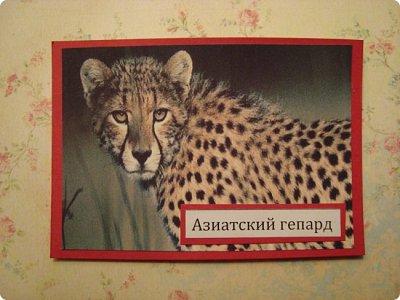 Это я к вам со своими АТСками!!! Выбирают только участники совместника http://stranamasterov.ru/node/1040245 Я посвятила свои карточки животным, занесенными в Красную книгу.... Итак, вот что у меня получилось....  Все вместе!!  Вся информация взята с просторов интернета.... фото 2