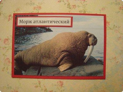 Это я к вам со своими АТСками!!! Выбирают только участники совместника http://stranamasterov.ru/node/1040245 Я посвятила свои карточки животным, занесенными в Красную книгу.... Итак, вот что у меня получилось....  Все вместе!!  Вся информация взята с просторов интернета.... фото 3