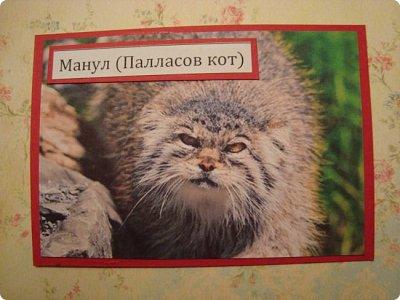 Это я к вам со своими АТСками!!! Выбирают только участники совместника http://stranamasterov.ru/node/1040245 Я посвятила свои карточки животным, занесенными в Красную книгу.... Итак, вот что у меня получилось....  Все вместе!!  Вся информация взята с просторов интернета.... фото 4