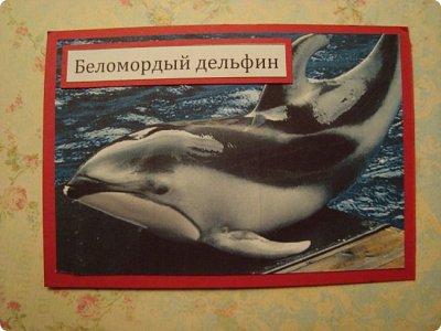 Это я к вам со своими АТСками!!! Выбирают только участники совместника http://stranamasterov.ru/node/1040245 Я посвятила свои карточки животным, занесенными в Красную книгу.... Итак, вот что у меня получилось....  Все вместе!!  Вся информация взята с просторов интернета.... фото 6