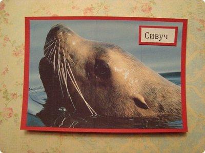 Это я к вам со своими АТСками!!! Выбирают только участники совместника http://stranamasterov.ru/node/1040245 Я посвятила свои карточки животным, занесенными в Красную книгу.... Итак, вот что у меня получилось....  Все вместе!!  Вся информация взята с просторов интернета.... фото 7