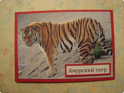 Это я к вам со своими АТСками!!! Выбирают только участники совместника http://stranamasterov.ru/node/1040245 Я посвятила свои карточки животным, занесенными в Красную книгу.... Итак, вот что у меня получилось....  Все вместе!!  Вся информация взята с просторов интернета.... фото 9
